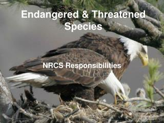 Endangered & Threatened Species