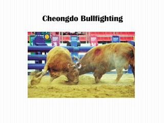Cheongdo  Bullfighting