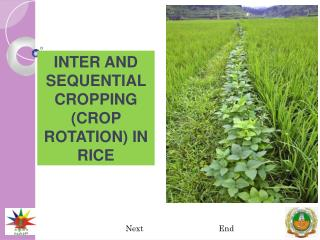INTER AND SEQUENTIAL CROPPING (CROP ROTATION) IN RICE