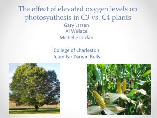 The effect of elevated oxygen levels on photosynthesis in C3 vs. C4 plants