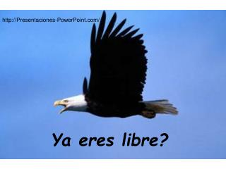 Ya eres libre
