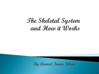 The Skeletal System and How it Works