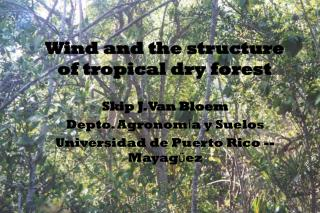 Wind and the structure of tropical dry forest