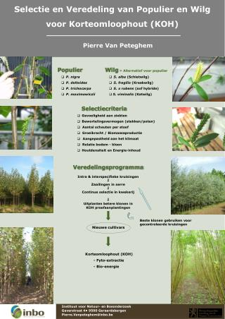 Selectie en Veredeling van Populier en Wilg voor Korteomloophout (KOH)