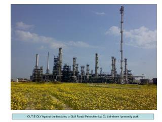 CUTIE OLY Against the backdrop of Gulf Farabi Petrochemical Co Ltd where I presently work