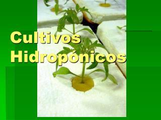 Cultivos Hidrop nicos