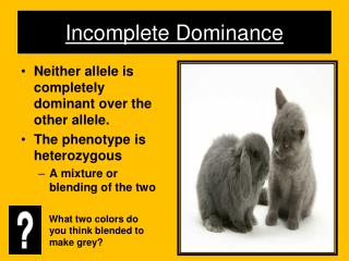 Incomplete Dominance