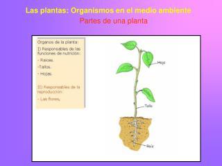 Las plantas: Organismos en el medio ambiente