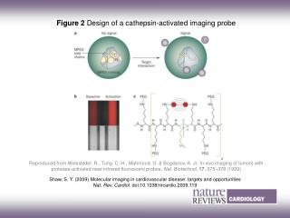 Figure 2 Design of a cathepsin ? activated imaging probe