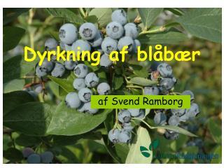 Dyrkning af blåbær