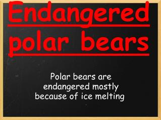 Endangered polar bears