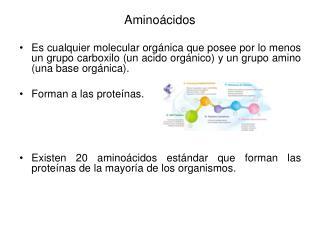 Amino cidos