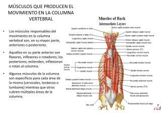 M SCULOS QUE PRODUCEN EL MOVIMIENTO EN LA COLUMNA VERTEBRAL