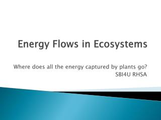 Energy Flows in Ecosystems