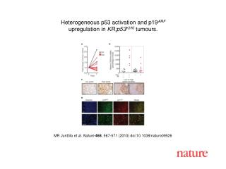 MR Junttila  et al. Nature 468 , 567-571 (2010) doi:10.1038/nature09526