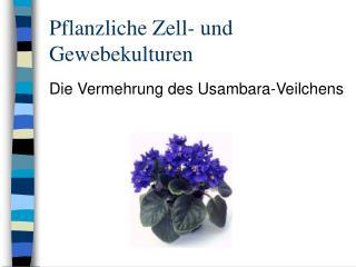 Pflanzliche Zell- und Gewebekulturen