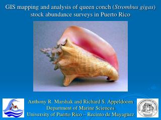 GIS mapping and analysis of queen conch ( Strombus gigas ) stock abundance surveys in Puerto Rico