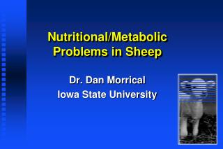 Nutritional/Metabolic Problems in Sheep