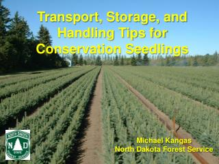 Transport, Storage, and Handling Tips for Conservation Seedlings