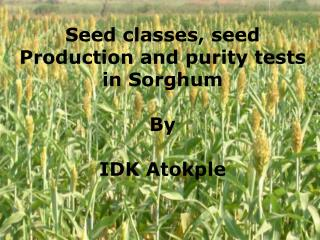 Seed classes, seed  Production and purity tests in Sorghum By  IDK Atokple