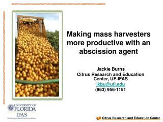 Making mass harvesters more productive with an abscission agent