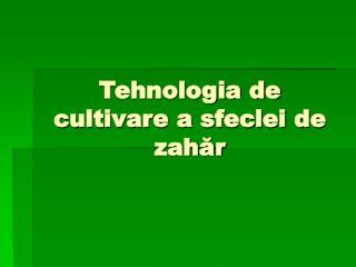 Tehnologia de cultivare a sfeclei de zahăr
