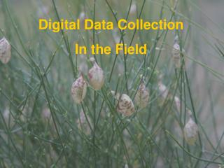 Digital Data Collection In the Field