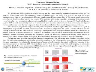 Thrust 3:  Molecular Propulsion: Chemical Sensing and  Chemotaxis  of DNA Driven by RNA Polymerase