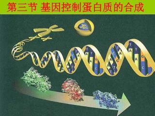 第三节 基因控制蛋白质的合成