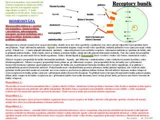 Receptory bun ěk