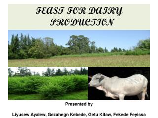 FEAST FOR DAIRY PRODUCTION