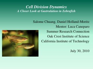 Cell Division Dynamics  A Closer Look at Gastrulation in Zebrafish