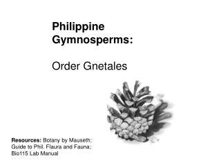 Philippine Gymnosperms: Order Gnetales