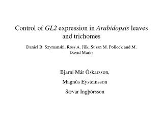 Control of  GL2  expression in  Arabidopsis  leaves and trichomes