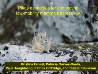Pikas as models for connecting  low-mobility mammals across I-90