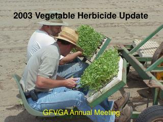 2003 Vegetable Herbicide Update