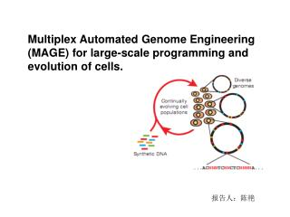 Multiplex Automated Genome Engineering (MAGE) for large-scale programming and evolution of cells.