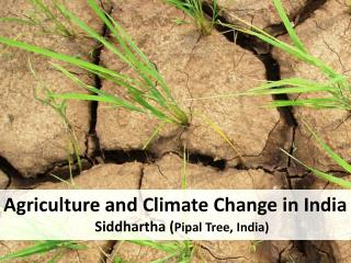 Agriculture and Climate Change in India  Siddhartha ( Pipal Tree, India)