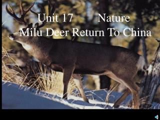 Unit 17        Nature  Milu Deer Return To China