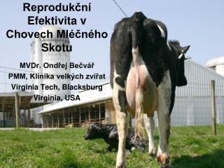 Reprodukční Efektivita v Chovech Mléčného Skotu
