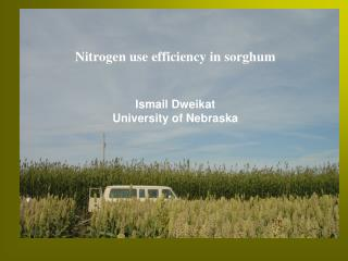 Nitrogen use efficiency in sorghum Ismail Dweikat  University of Nebraska