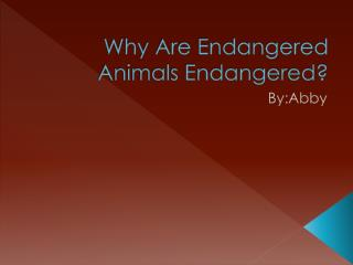 Why Are Endangered Animals Endangered?