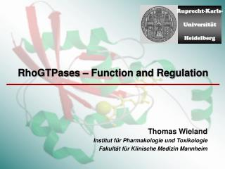 RhoGTPases – Function and Regulation