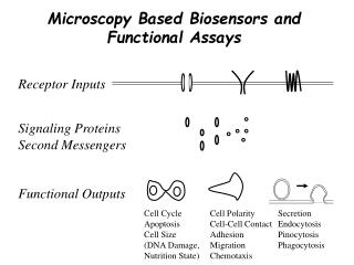 Microscopy Based Biosensors and Functional Assays
