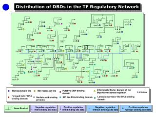 Distribution of DBDs in the TF Regulatory Network