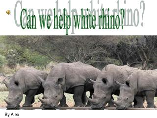 Can we help white rhino?