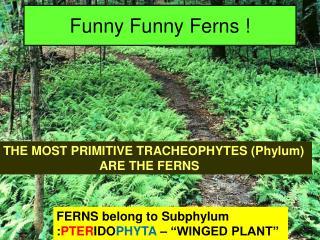 Funny Funny Ferns !