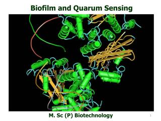 Biofilm and Quarum Sensing