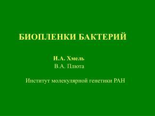 БИОПЛЕНКИ БАКТЕРИЙ  И.А. Хмель В.А. Плюта                 Институт молекулярной генетики РАН