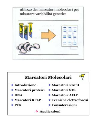 Marcatori Molecolari